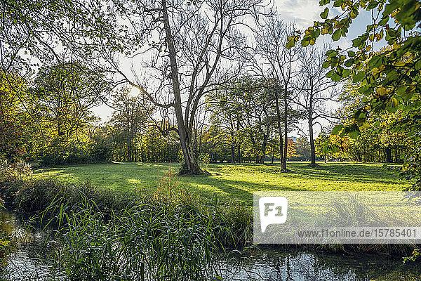 Nordenglischer Garten im Herbst  Oberfohring  München  Deutschland