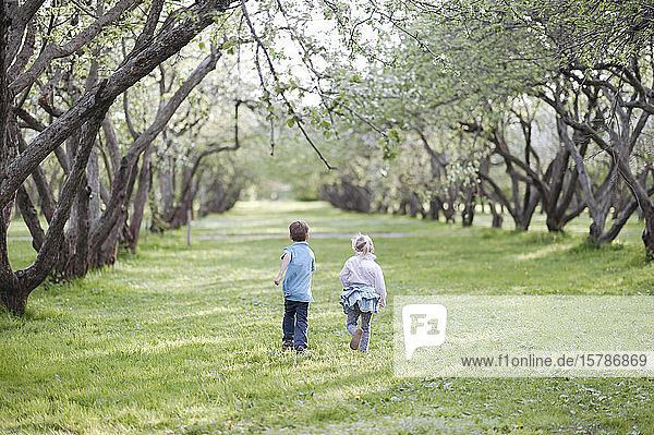 Rückenansicht eines kleinen Jungen und eines Mädchens  die nebeneinander auf einer Wiese laufen