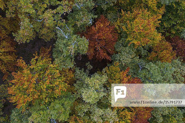 Forest in autumn in the Monastery of Valvanera  La Rioja  Spain  Europe.