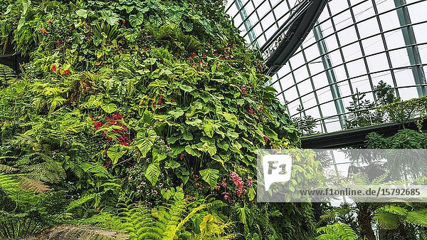 Lush vegitation in the Cloud Forest Dome  Gardens by the Bay  Singapore  Republic of Singapore.