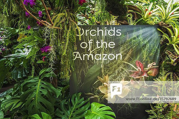 Orchids of the Amazon  Cloud Forest Dome  Gardens by the Bay  Singapore  Republic of Singapore.