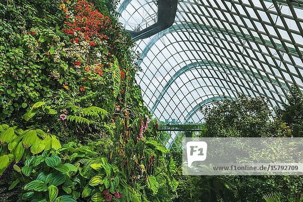 Lush vegitation and walkway in the Cloud Forest Dome  Gardens by the Bay  Singapore  Republic of Singapore.