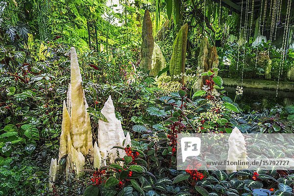 Stalagmites in the Cloud Forest Dome  Gardens by the Bay  Singapore  Republic of Singapore.