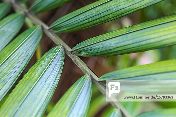 Leaves of a palm tree.