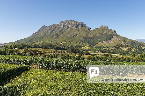 View of the mountains and vineyards of Stellenbosch from the Delaire Graff Estate in the Western Cape Province of South Africa near Cape Town.