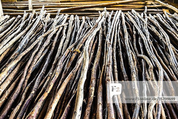 Pile of eucalyptus branches in the process of tobacco drying  Republic of Cuba  Caribbean  Central America.