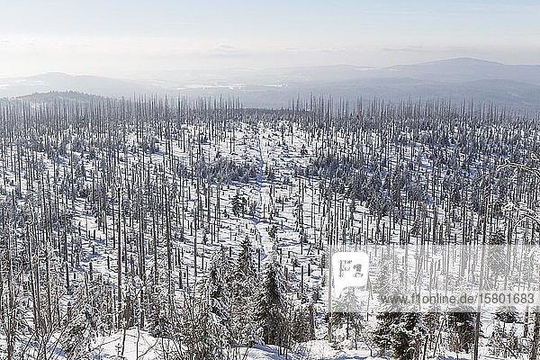 Winter im Bayerischen Wald  Winter im Bayerischen Wald