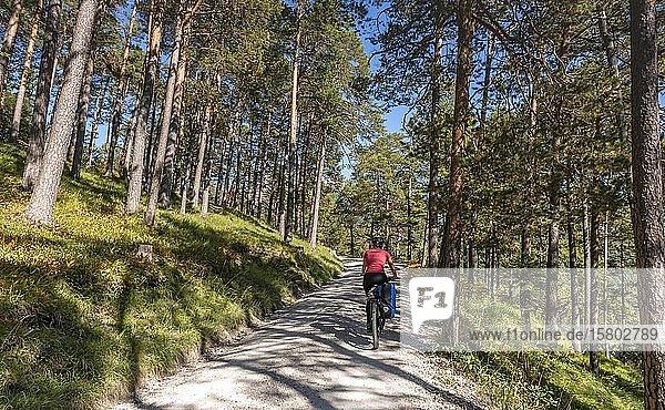 Fahrradfahrer  Mountainbiker auf Schotterweg durch Wald  Schotterweg zum Karwendelhaus  Karwendeltal  Tirol  Österreich  Europa