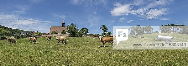 Cows in front of the church of  Schwarzensee  Lower Austria  Austria  Europe