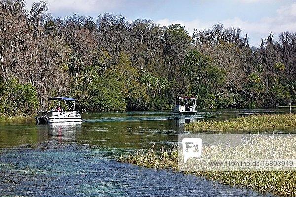 Flusslandschaft,  Schilf,  Boote,  Bäume mit Louisianamoos oder Spanisches Moos (Tillandsia usneoides),  Rainbow River,  Rainbow Springs State Park,  Dunnelon,  Florida,  USA,  Nordamerika