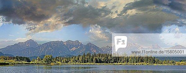 Hopfensee mit Allgäuer Alpen  Hopfen am See  Bayern  Deutschland  Europa