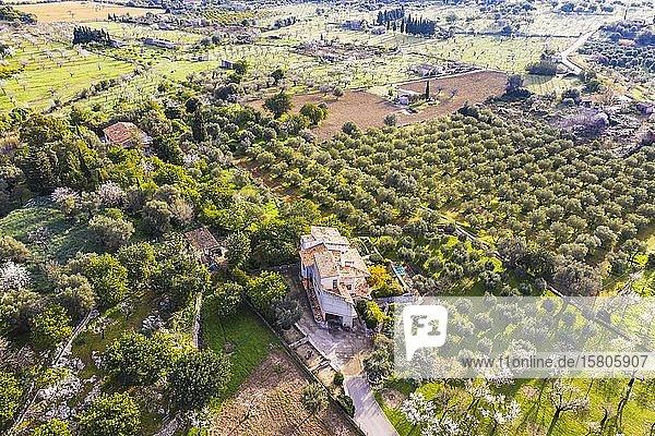 Finca und Plantagen mit Olivenbäumen und blühende Mandelbäume  bei Caimari  Region Raiguer  Luftbild  Mallorca  Balearen  Spanien  Europa
