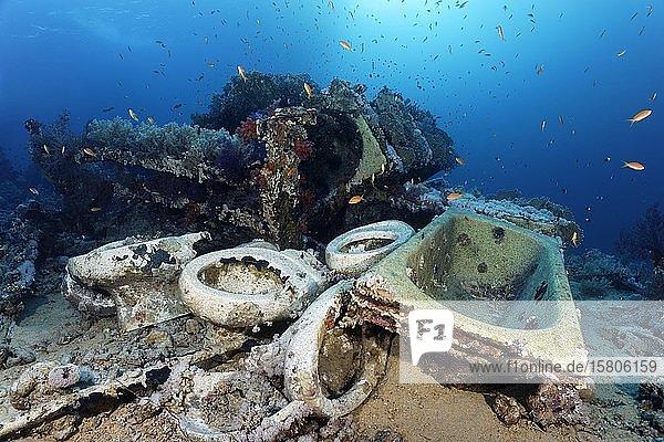 Überreste Schiffswrack Yolanda mit Ladung  Badewannen  Toilettenschüsseln  Yolanda-Riff  Ras Muhammed  Scharm el Scheikh  Sinai Halbinsel  Rotes Meer  Ägypten  Afrika