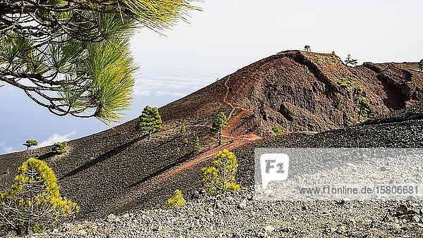 Wanderweg zum Vulkan Martin auf La Palma  La Palma  Kanaren  Spanien  Europa