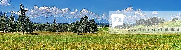 Naturbiotop mit saftiger Wiese und Ammergebirge  Voralpenland  Unterreithen  Bayern  Deutschland  Europa