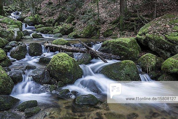 Gertelbach  Gertelbach-Wasserfälle  Gertelbachfälle  Gertelbachschlucht  Bühl  Bühlertal  Nordschwarzwald  Schwarzwald  Baden-Württemberg  Deutschland  Europa