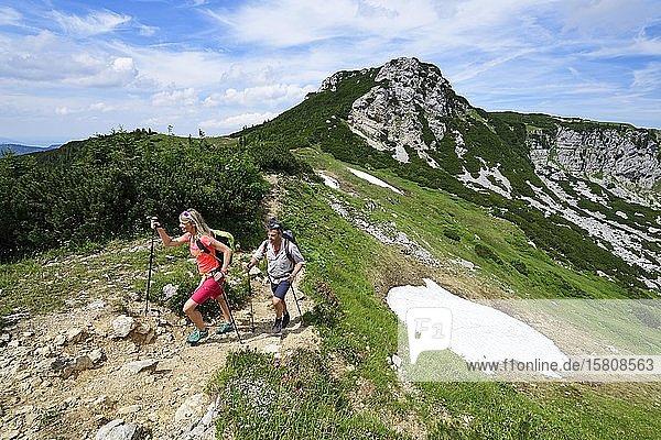 Hikers climbing to the summit of the Geigelstein  Sachrang  Chiemgau  Upper Bavaria  Bavaria  Germany  Europe