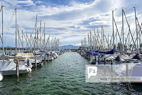 Segelboote im Yachthafen Seebruck  Seeon  Chiemsee  Chiemgau  Oberbayern  Bayern  Deutschland  Europa