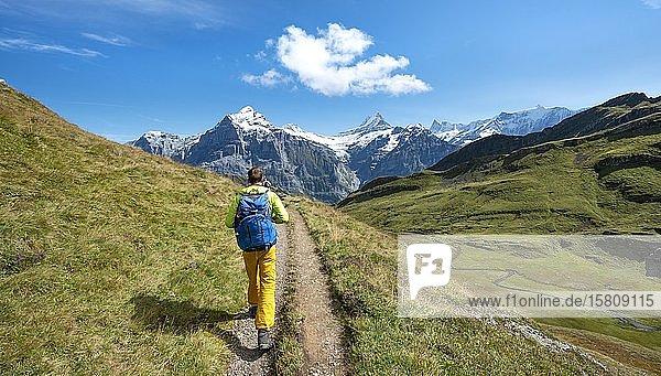 Wanderer auf Wanderweg  hinten schneebedeckte Berggipfel Fiescherhorn  Wetterhorn und Schreckhorn  Grindelwald  Bern  Schweiz  Europa
