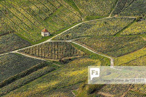 Weinberge von Chateau-Chalon,  Jura,  Bourgogne-Franche-Comté,  Frankreich,  Europa