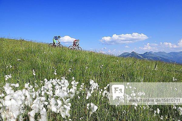 Mountain bikers on the south side of the Hohe Salve  Hopfgarten  Kitzbühel Alps  Tyrol  Austria  Europe