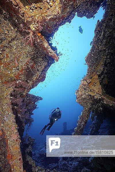 Taucher am Wrack der Dunraven  gesunken am 22. April 1876  Sharm el Sheikh  Halbinsel Sinai  Rotes Meer  Ägypten  Afrika