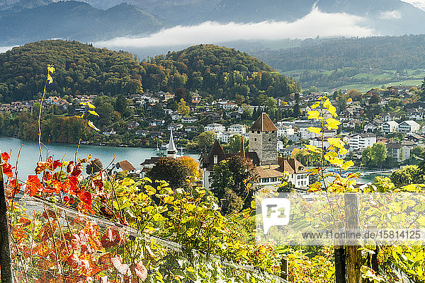 Spiez Castle on shores of lake Thun framed by vine leaves in autumn  canton of Bern  Switzerland  Europe