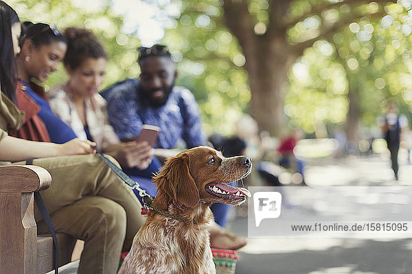 Friends with dog on park bench