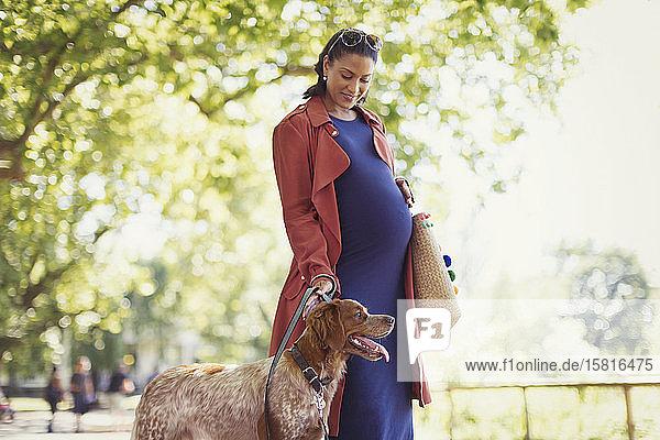 Schwangere Frau führt Hund im Park aus