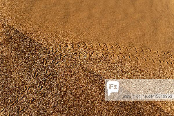 Tierspuren in einer Sanddüne in der Wüste Sahara  Merzouga  Marokko