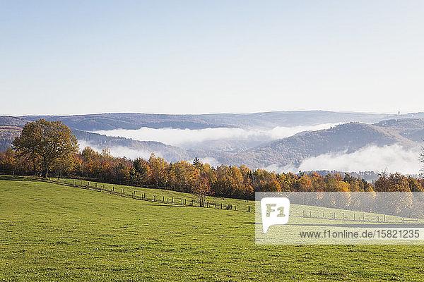 Deutschland  Nordrhein-Westfalen  Klarer Himmel über Herbstwald und neblige Hügel im Nationalpark Eifel