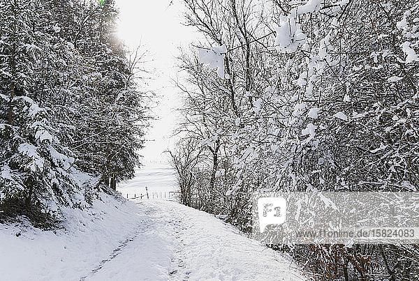 Deutschland  Nordrhein-Westfalen  Leerer schneebedeckter Fußweg zwischen kahlen Waldbäumen des Hohen Venns - Naturpark Eifel