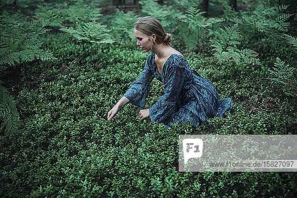 woman picks berries in a blue dress