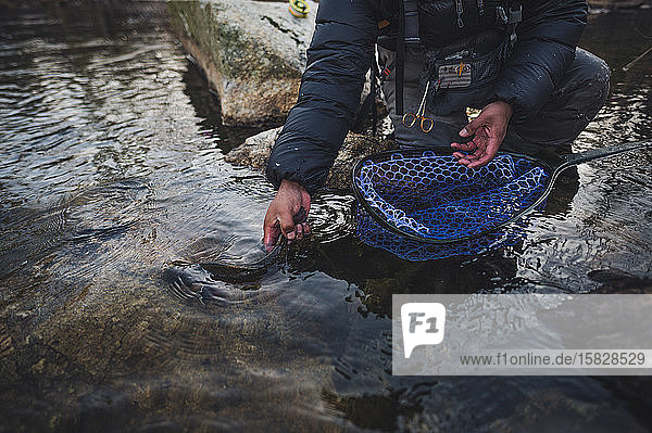 A man released a brook trout during a cold morning fishing in Maine