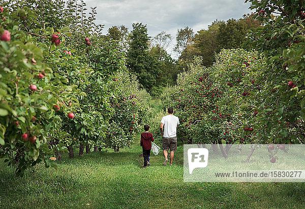 Vater und Sohn beim gemeinsamen Spaziergang durch eine Apfelplantage im Herbst.