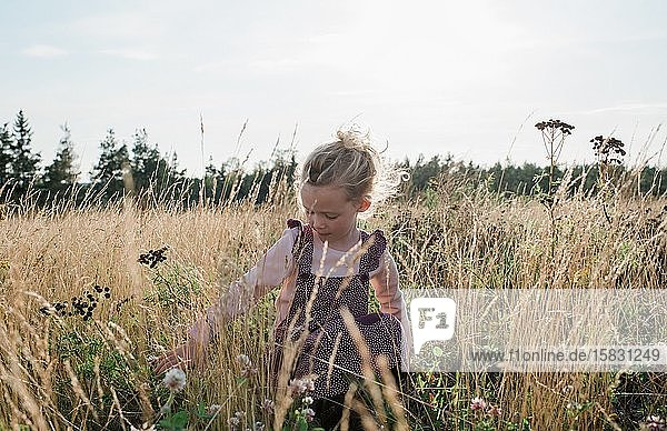 young girl sitting in a meadow picking flowers at sunset
