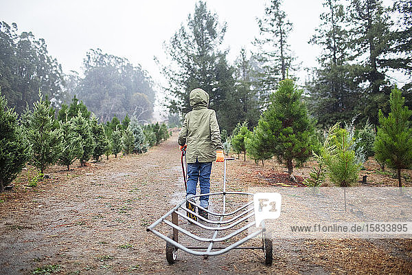 Back of child with a saw pushing cart on a Christmas Tree Farm