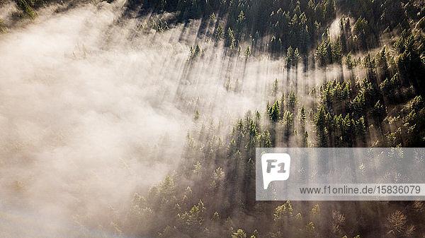 Stunning morning light cuts through the fog in Washington