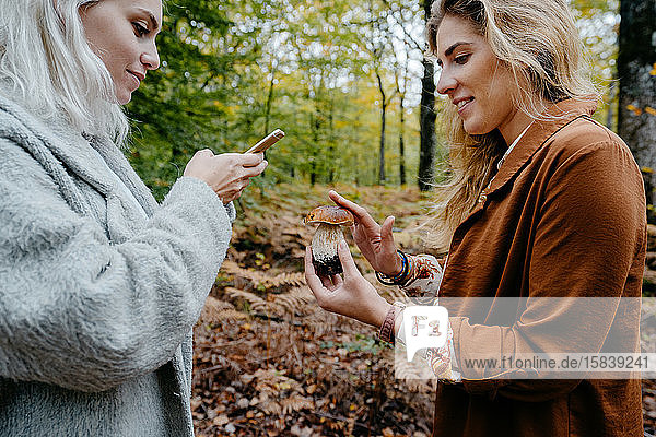 Women taking pictures of mushroom in a forest with a phone