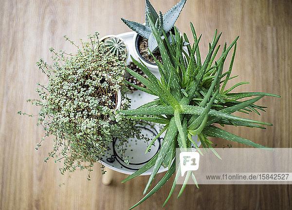 Top view of plants in pots