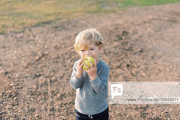 Kleiner Junge mampft fröhlich seinen selbst gepflückten Apfel.