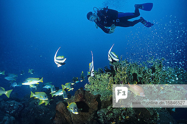 A diver swims over a coral reef in Madagascar.