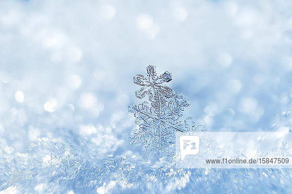 Snowflakes close-up. Macro photo. The concept of winter