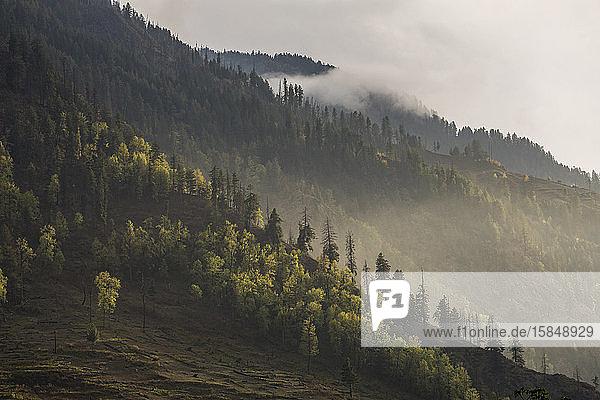 Hügellandschaft mit Pinien und tiefhängenden Wolken bei Sonnenuntergang  Himalaya