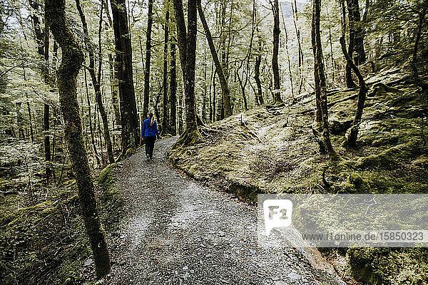 Eine Wanderin wandert auf dem Routeburn Track Neuseeland durch die Wälder