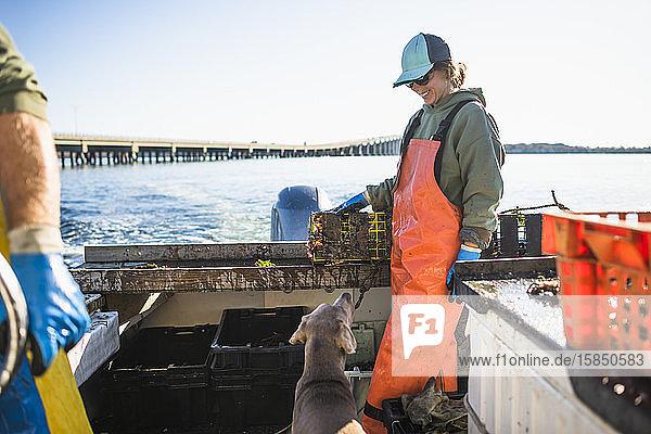 Bootshund beim Aquakultur-Muschelfischen am frühen Morgen