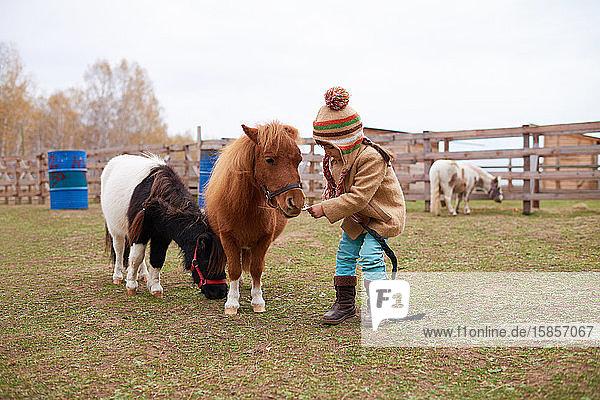 Mädchen geht mit süßen kleinen Ponys spazieren