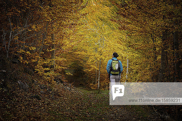 Woman hiking in a beautiful autumn forest