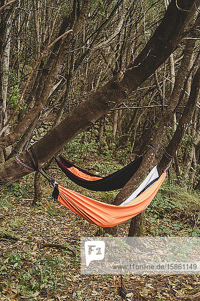 Two empty hammocks hang from trees in rainforest
