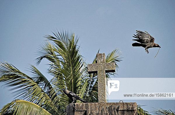 Crows around catholic church